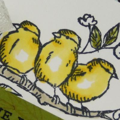 Ballade des oiseaux – Stampin'Up!