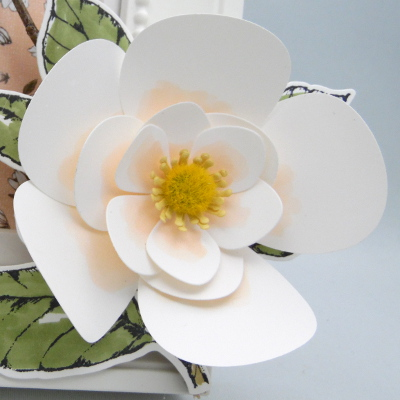 Vidéo – Fleurs de magnolia